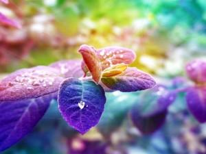 Hojas y colores