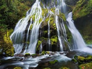 Cascada sobre rocas con musgo