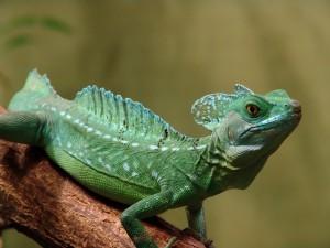 Un bonito lagarto verde sobre un tronco