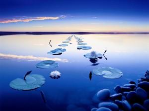 Postal: Nenúfares en el lago