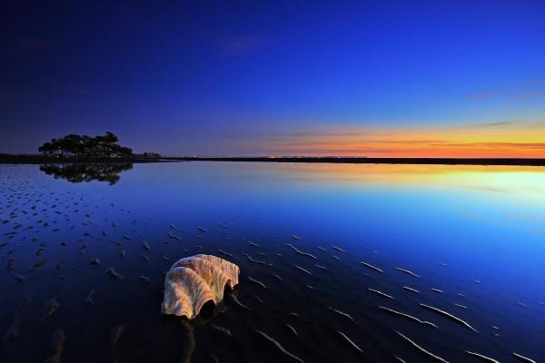 Gran concha en la superficie sosegada del mar