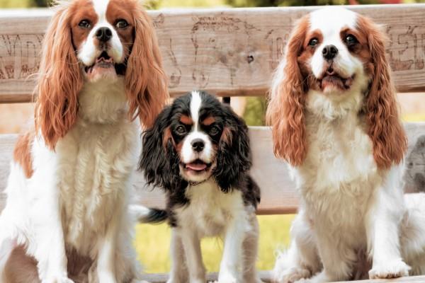 Tres perros en un banco