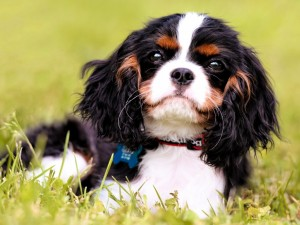 Postal: Perrito sentado en la hierba
