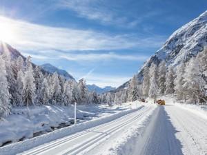 Carretera y árboles cubiertos de nieve