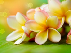 Postal: Flores sobre una hoja verde