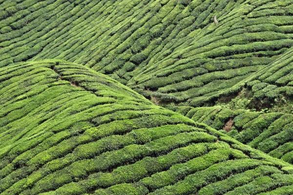 Campo de agricultura con plantas verdes
