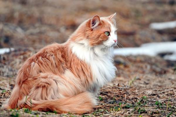 Gato con un bello pelaje