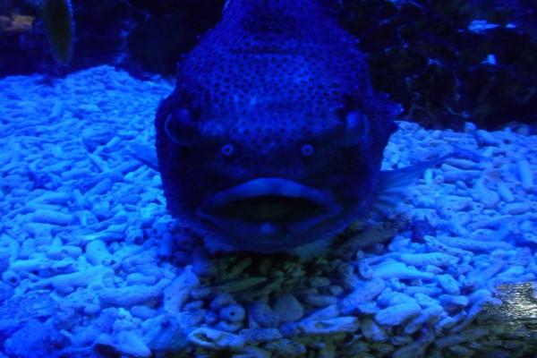 Un gran pez en el acuario