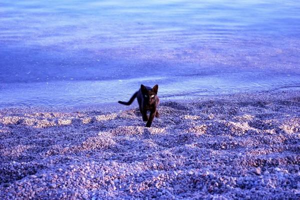 Un gato caminando por la playa