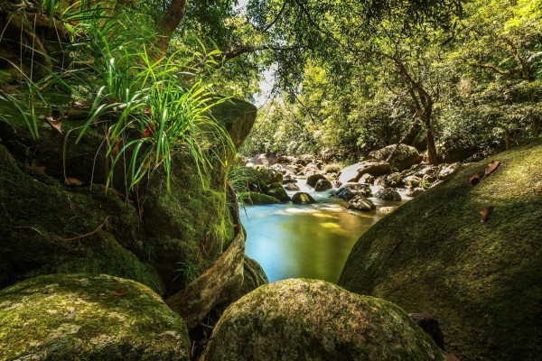 Río y rocas en la selva