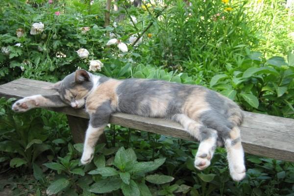 Gatito durmiendo sobre un banco de madera
