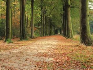 Postal: Camino en otoño