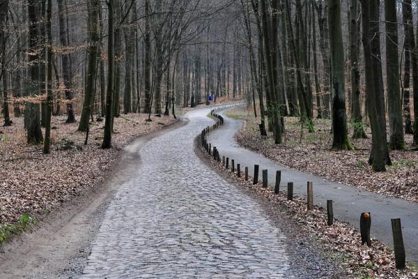 Camino asfaltado en el bosque