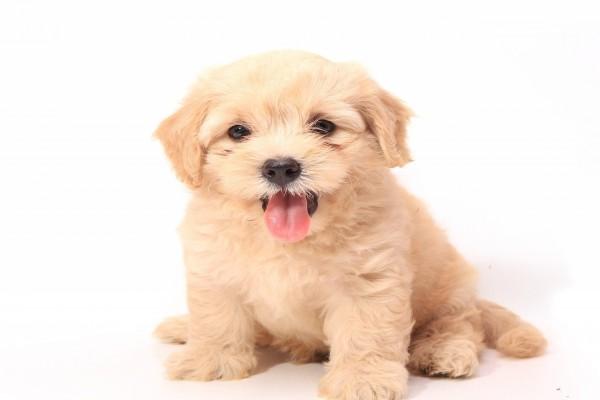 Un bello perrito