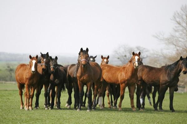 Manada de caballos en la hierba fresca