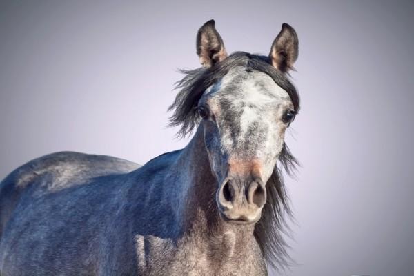 Cara de un caballo