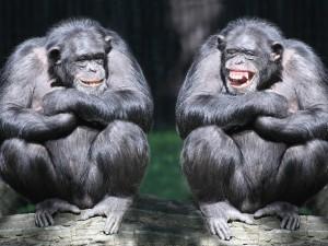 Dos chimpancés riéndose