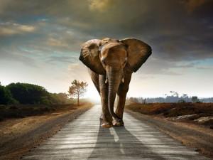 Postal: Elefante en la carretera