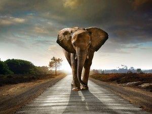 Elefante en la carretera