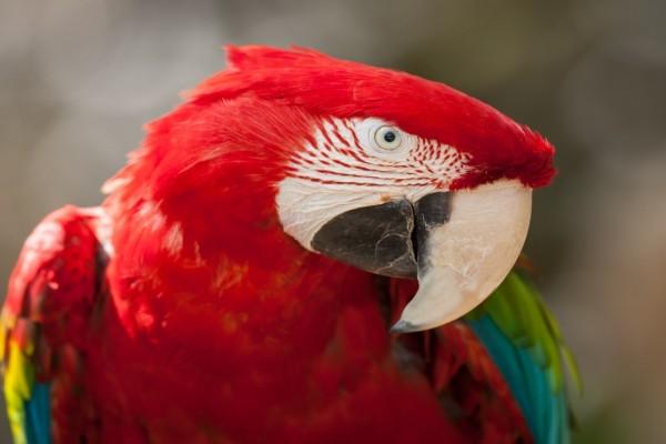 Un colorido guacamayo