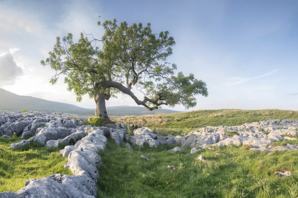 Árbol en el campo entre rocas