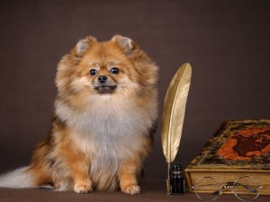Postal: Un bello perro junto a una pluma con tinta, un libro y unas gafas