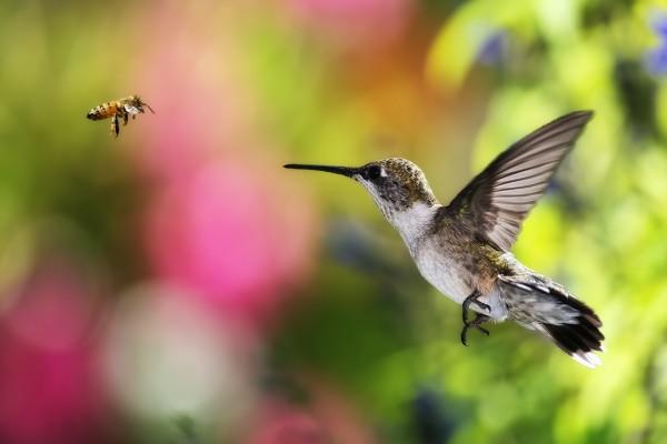 Abeja y colibrí en el aire