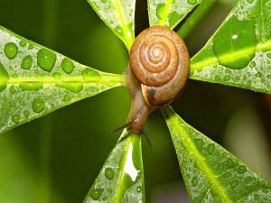 Un caracol en el centro de la planta