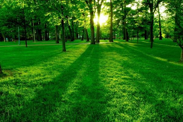 Un gran parque verde