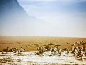Gaviotas chapoteando en el agua