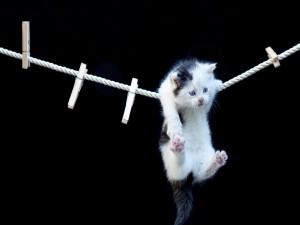 Postal: Gatito en una cuerda