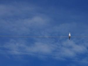 Postal: Un pájaro sobre una cuerda