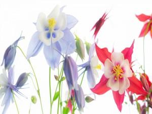 Postal: Bellas flores en verano