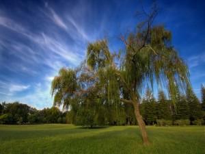 Postal: Árboles en la pradera verde