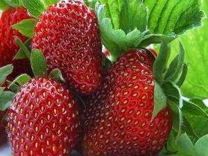 Deliciosas fresas en la planta