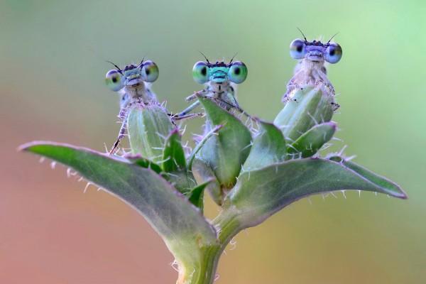 Insectos con grandes ojos sobre una planta