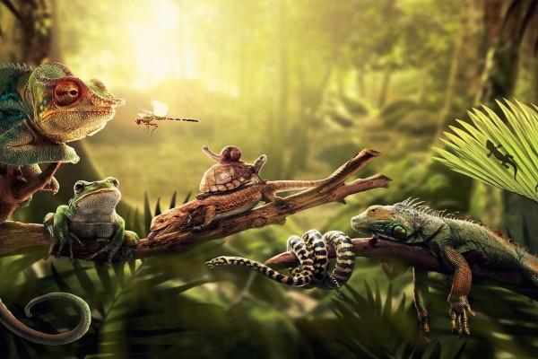 Animales sobre las ramas
