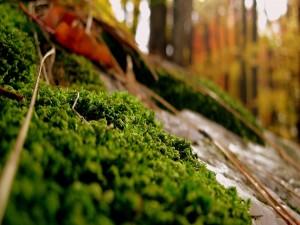 Postal: Plantas verdes en el bosque