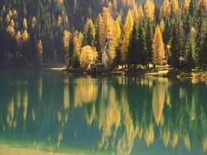 Postal: Lago en el bosque