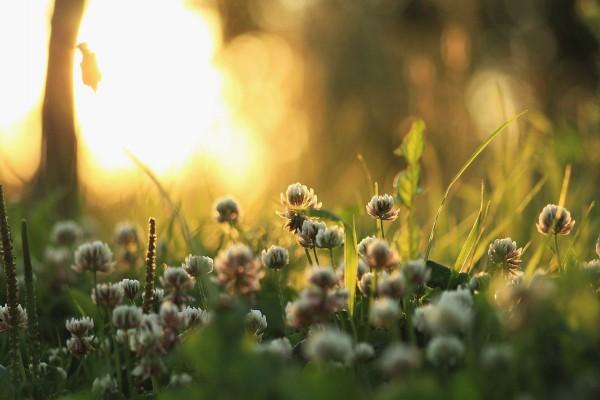 Flores silvestres en el bosque
