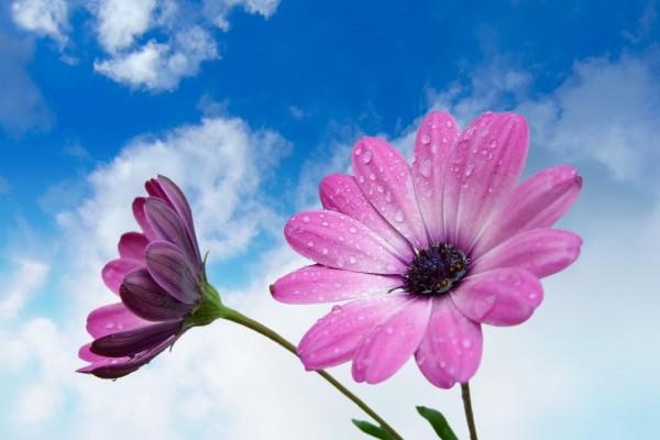 Flores y cielo