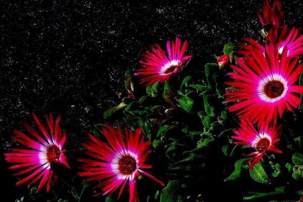 Flores de vivos colores