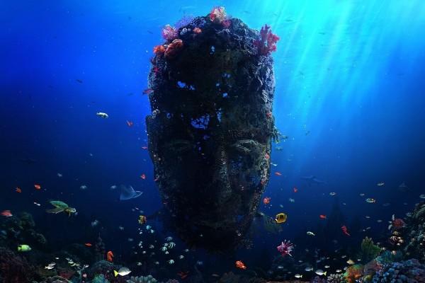Cara bajo el agua entre peces de colores