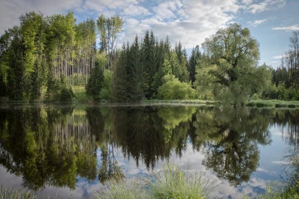 Bosque reflejado en las tranquilas aguas