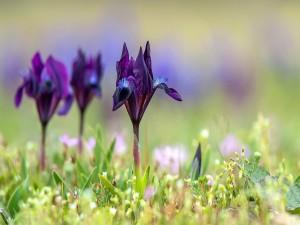 Flores púrpura entre la hierba fresca