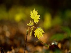 Brotes de una plantita con hojas verdes