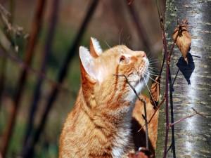 Postal: Un gato a punto de trepar por un árbol