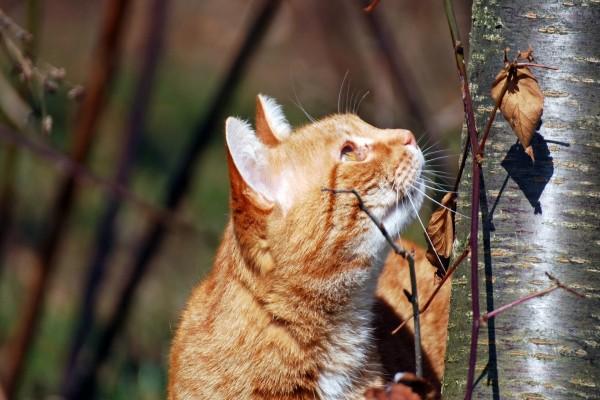 Un gato a punto de trepar por un árbol