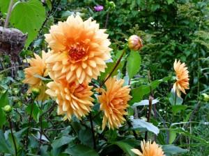 Hermosas flores de un suave color naranja