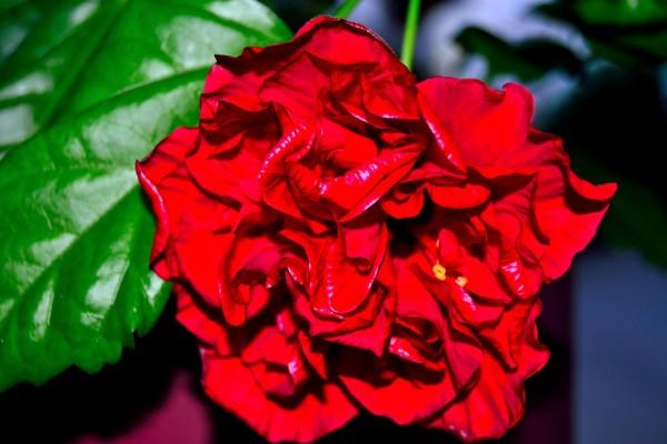 Una curiosa flor roja